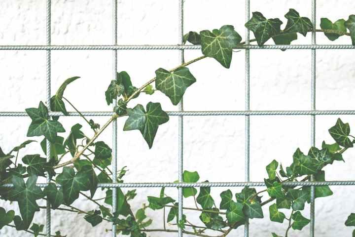 branch color decoration garden