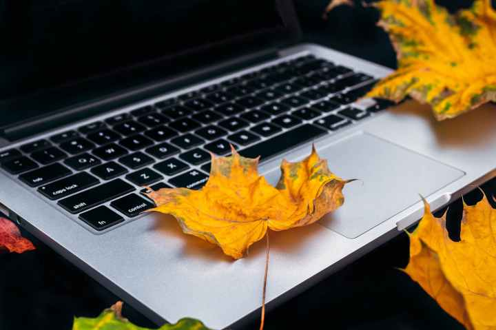 photo of dry leaf on laptop